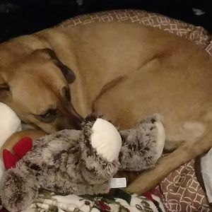 Bella And Her Stuff Animal. She Has Distroyed All Others But Not This One.