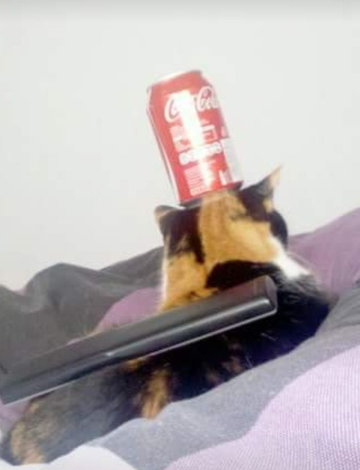 Decorated My Cat (can Is Empty)