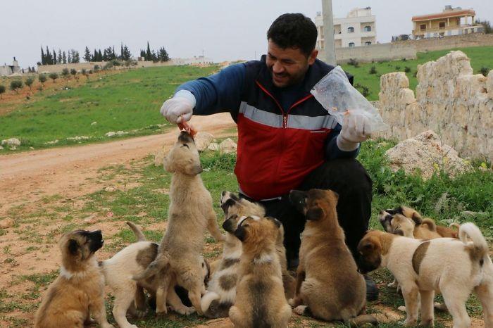 Dog Breeds Of Syria
