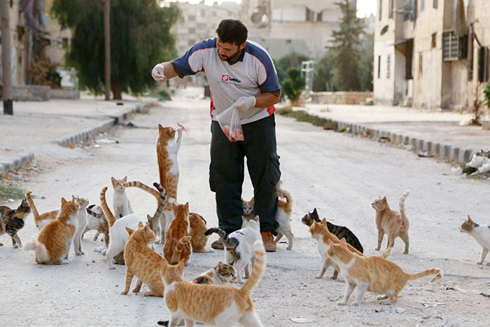 cat-man-aleppo-rescues-dog-puppies-syria-15