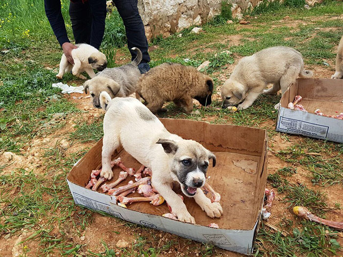 cat-man-aleppo-rescues-dog-puppies-syria-18