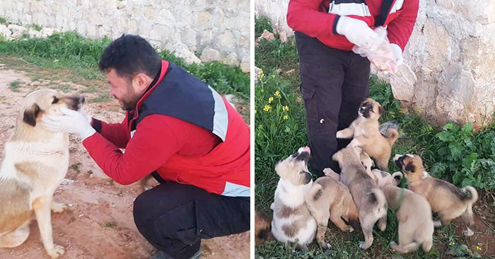 Dog Abandoned With Her 15 Puppies Finds The Best Person To Help Them