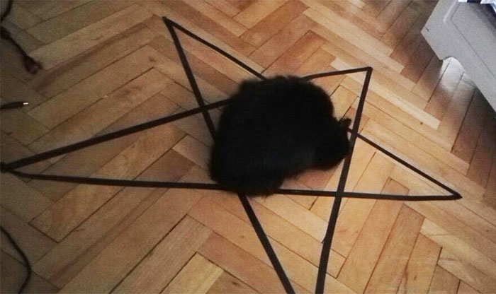 Guy Can't Get His Cat To Sit In The Circle, But Then Discovers Something Frightening About His Cat