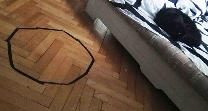 Este hombre no conseguía que su gato se sentara en el círculo, hasta que descubrió algo inquietante