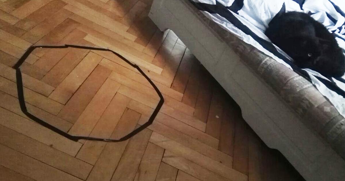Guy no puede conseguir su gato a sentarse en el círculo, pero entonces descubre algo espantoso sobre su gato