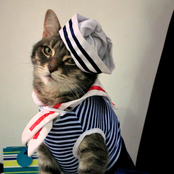 This Cat Enjoys Dressing Up!
