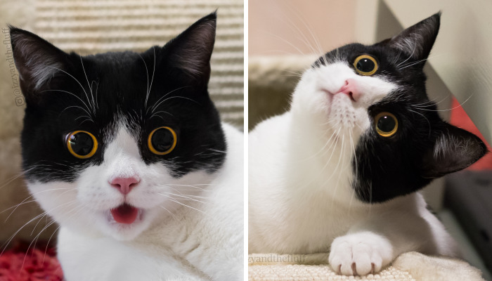 Meet Izzy, The Cat With The Most Expressive Face