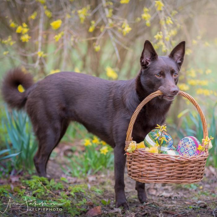 Easterphotos Kelpie Style!