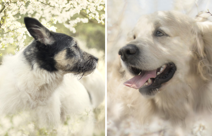 I Photographed Dogs Welcoming Spring