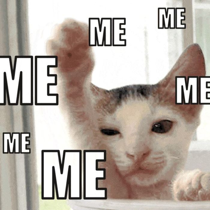 Spca Turns Adoption Announcements Into Gif Memes