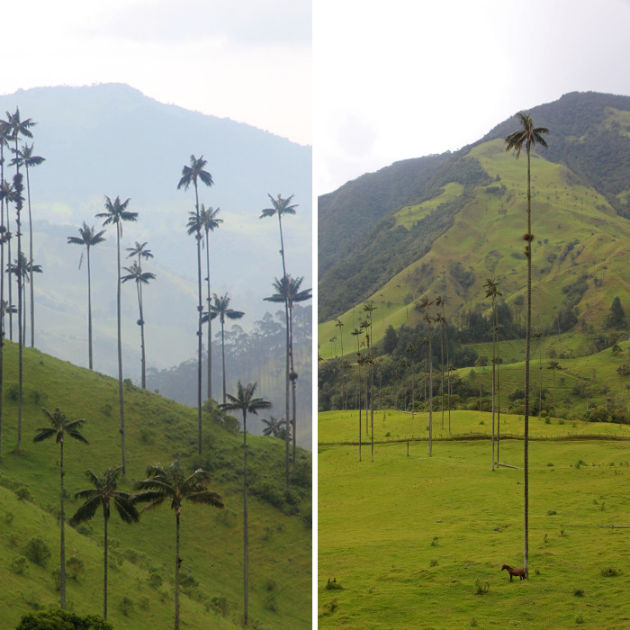 I Went To Colombia And Found These Insanely Tall Palm Trees