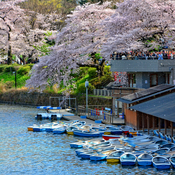 I Spent Two Weeks In Japan And I Fell In Love With This Country Where Past And Future Collide
