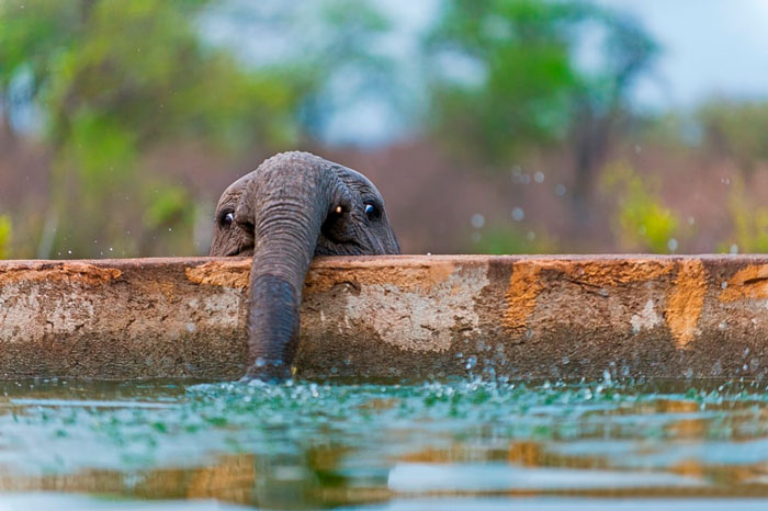 10 baby elephants that will instantly make you smile bored panda