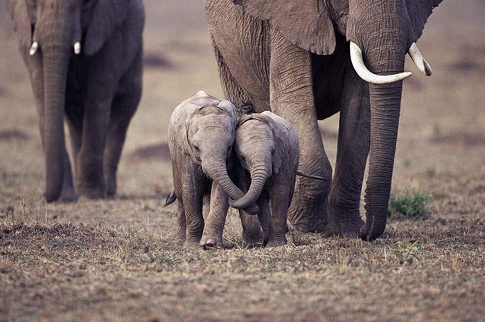 10+ Baby Elephants That Will Instantly Make You Smile ...