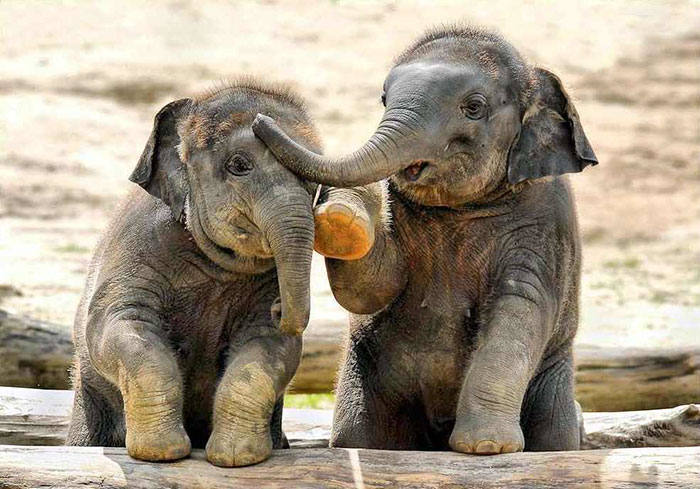 10 baby elephants that will instantly make you smile - Cute elephant pictures ...
