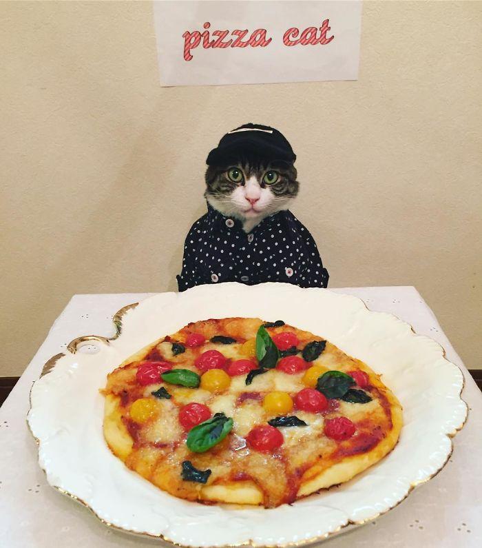 Cat Cosplay