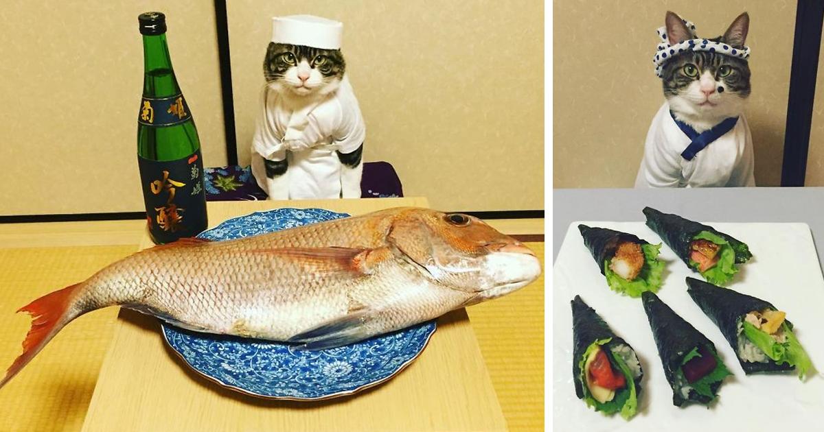 Offtopiqueando - Página 3 Dining-with-dressed-cat-maro-japan-fb7-1