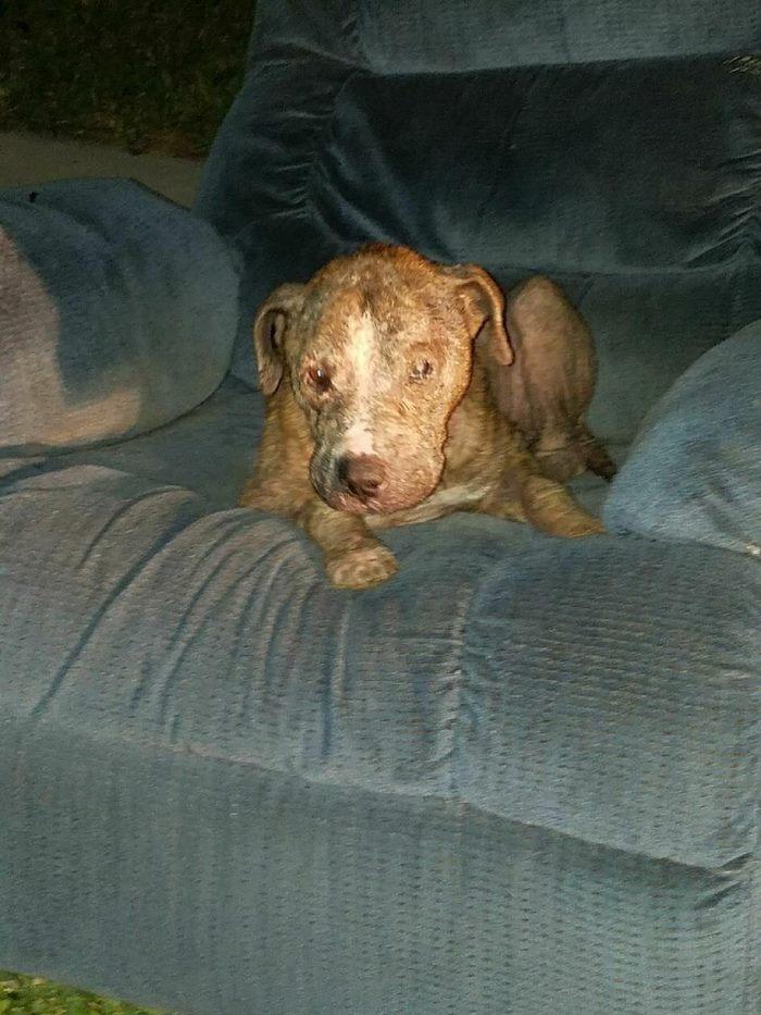 discarded-bait-dog-old-armchair-duke-1