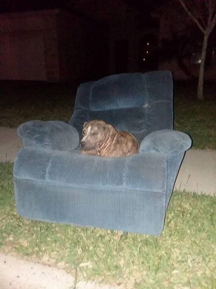 discarded-bait-dog-old-armchair-duke-9