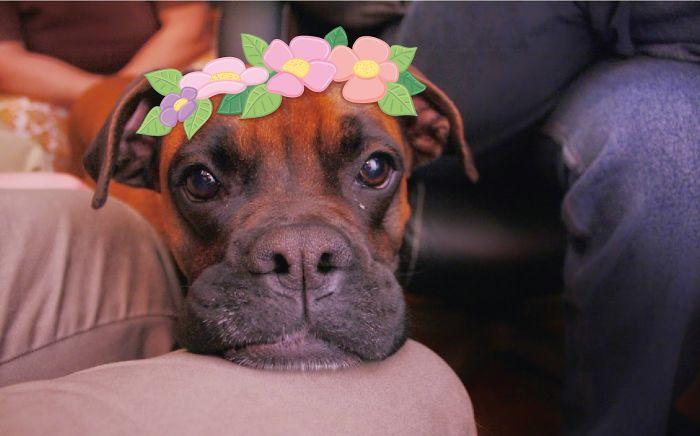 Look, I`m A Flower Princess! Do You Like Me?