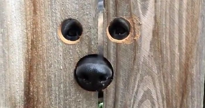 Neighbour Does The Most Brilliant Thing For A Dog Who Kept