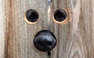 Esta vecina hizo algo muy ingenioso para que el perro de al lado dejara de saltar para saludarla todos los días