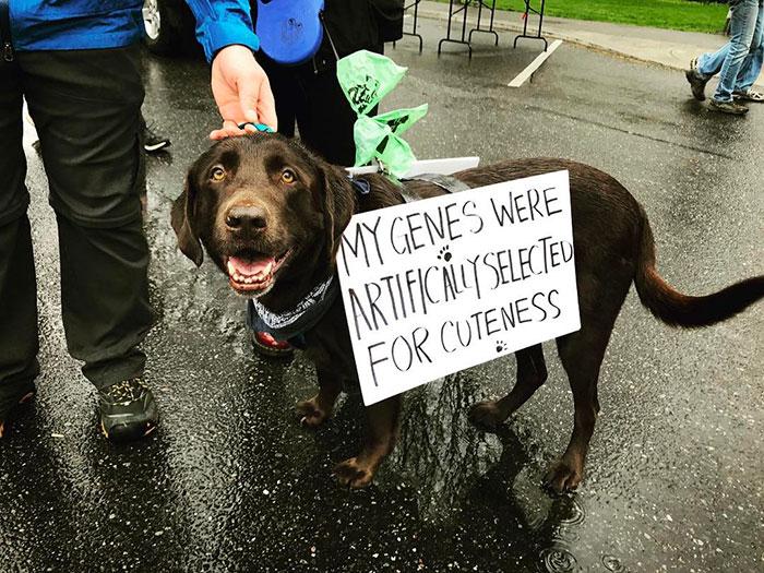 10+ Perros que marcharon por la ciencia para salvar el mundo