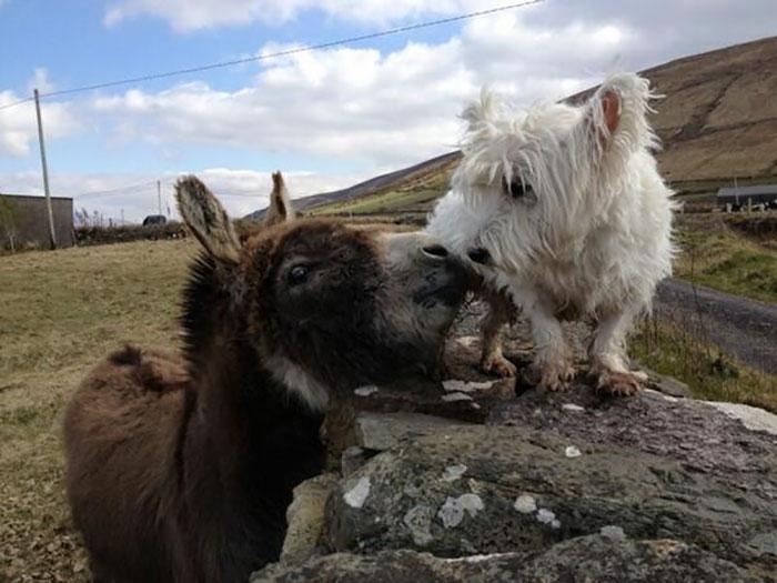 donkey-dog-long-distance-friendship-jack-buster-1