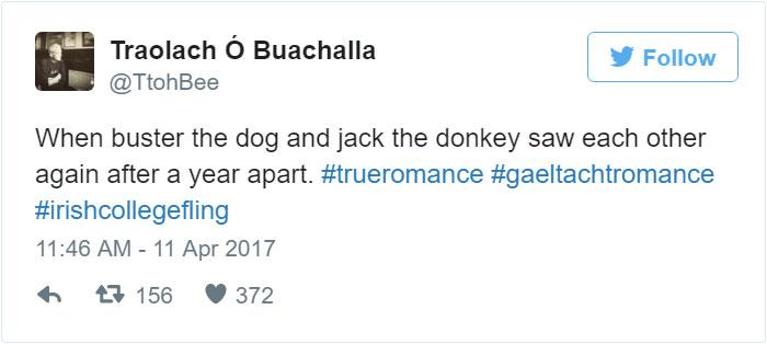 donkey-dog-long-distance-friendship-jack-buster-4