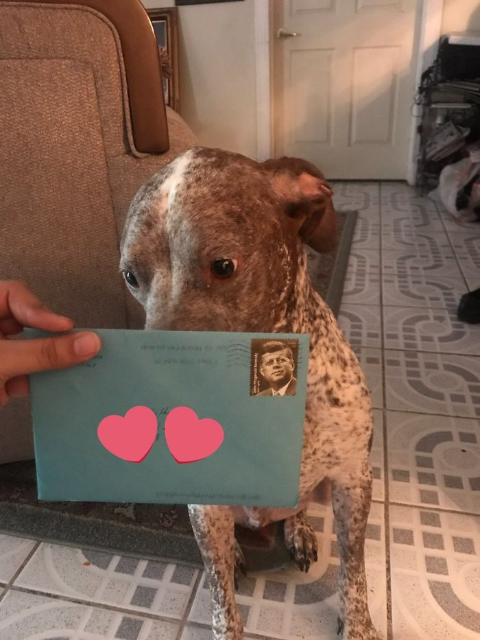 The Two Got Separated 2 Years Ago But Womans Ex Still Sends Birthday Cards To Their Dog