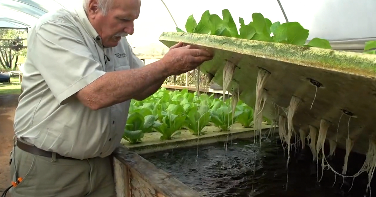 Revolutionary farming technique that uses fish bored panda for Fish and plants in aquaponics