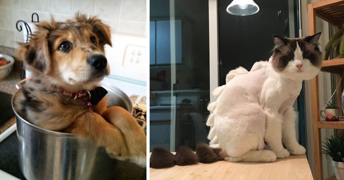 10+ Pet Owners Who Regret Letting Other People Look After Their Animals