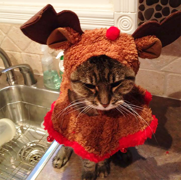 So My Mother Just Sent Me This Of My Cat