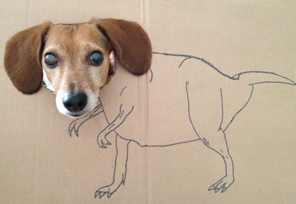 Oh The Joys Of Dogsitting