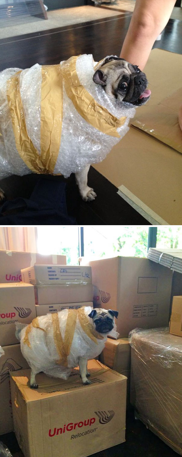 My Girlfriend Is Moving House, She Left Her Sister Alone And Then This Happened
