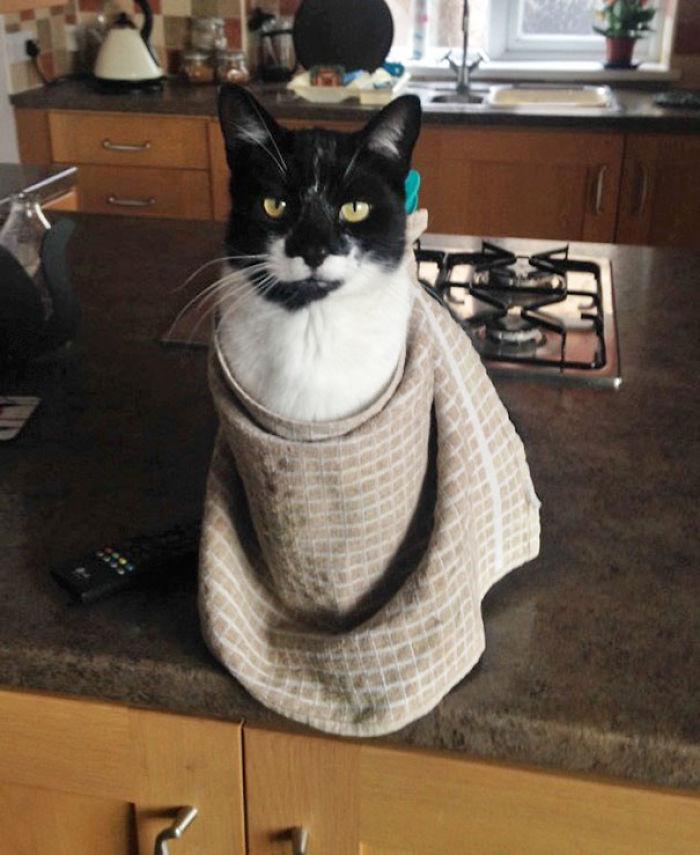 Le pedí a mi padre que me mandara fotos del gato, esta es la más reciente