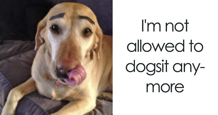 10 pet owners who regret letting other people look after their