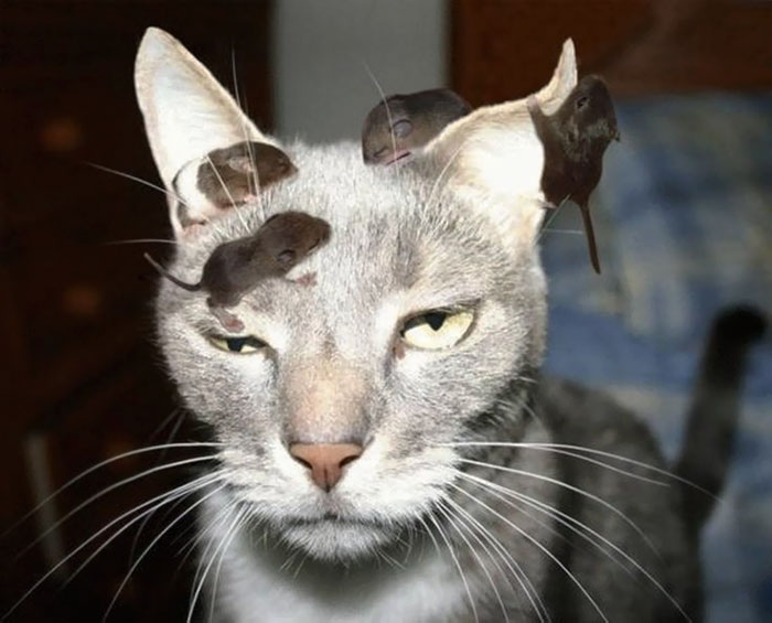 Some Cats Just Don't Give A F*ck