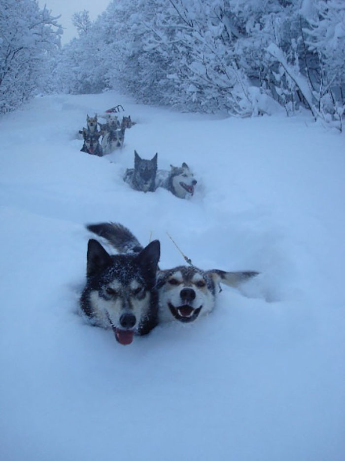 We Lost The Dude In The Sled About A Mile Back, But Who Cares, We're Having Too Much Fun