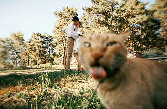 10+ Times Asshole Cats Hilariously Photobombed Purrfect Shots