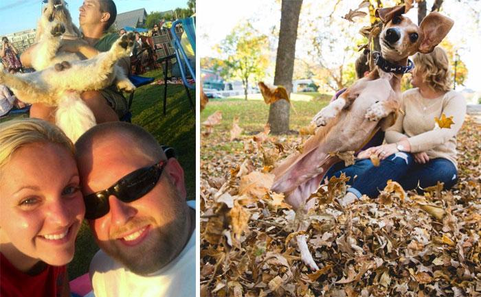 10+ Perros haciendo photobomb en fotos ajenas