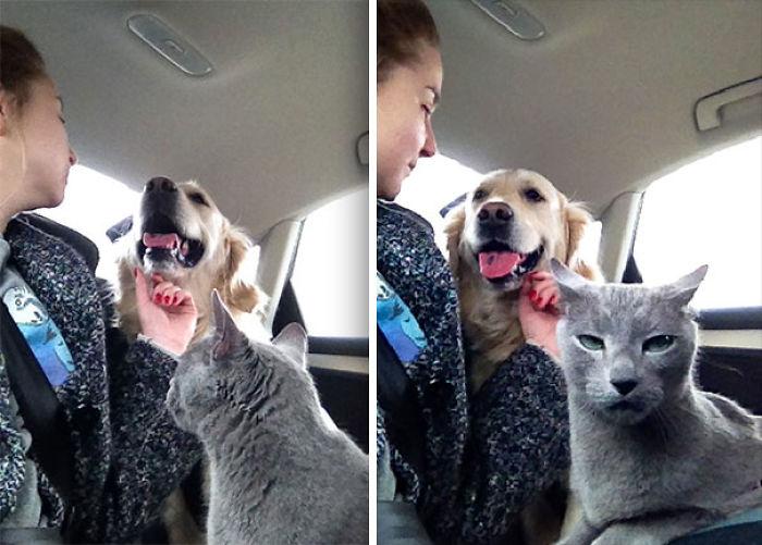 Mi gato no aprueba el amor perro - humano. No sabía que podía poner esa cara
