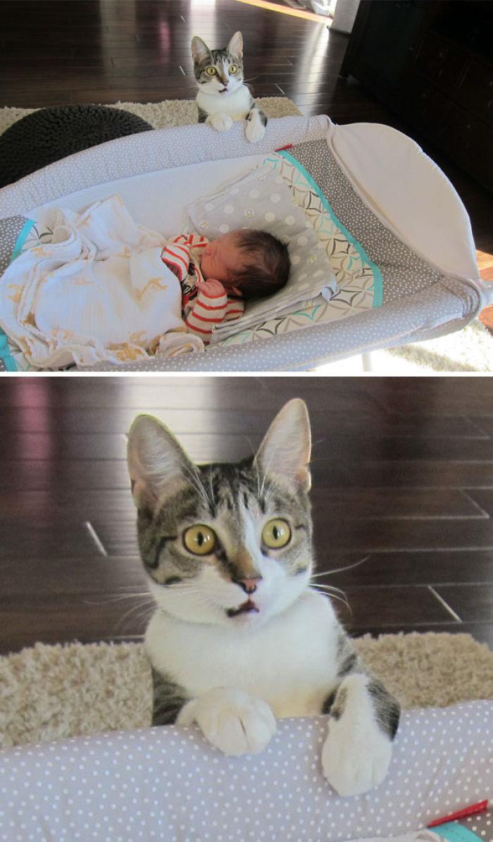 No le dijimos al gato que tuvimos un bebé