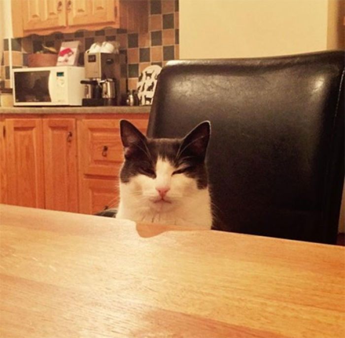 I Kicked Over My Cats Milk And Had No Replacement. He Sat Opposite Me As I Ate My Dinner Looking At Me Like This