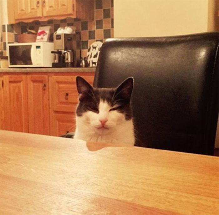 Derramé sin querer la leche del gato y no había más.No deja de mirarme así