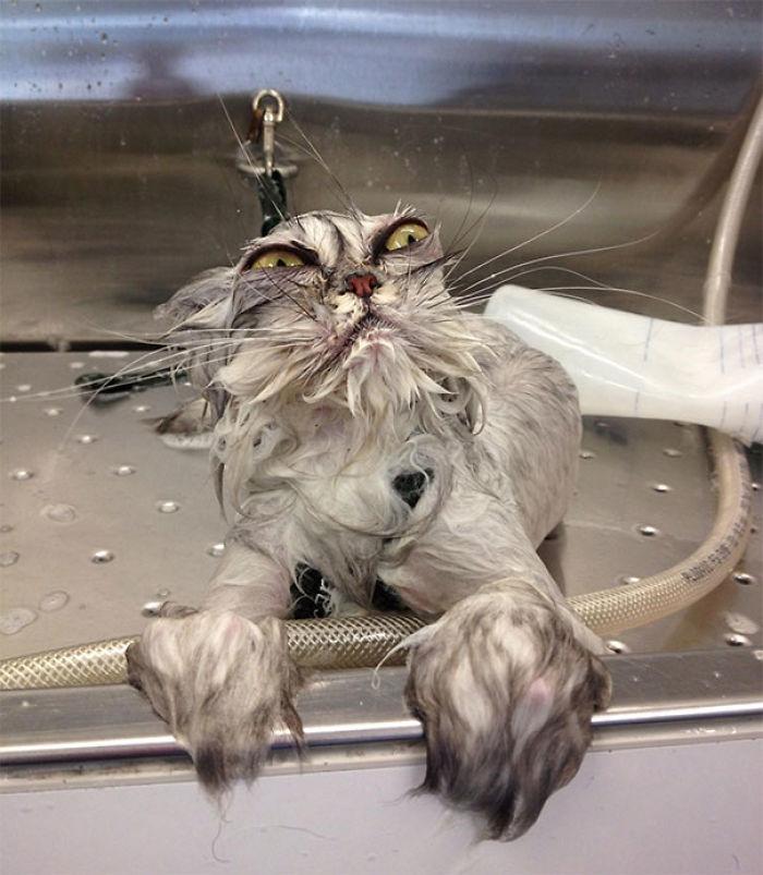 ¡Me has bañado, traidor!
