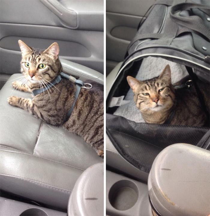 Le llevé al veterinario. Fotos de antes y después. Todo el viaje mirándome así