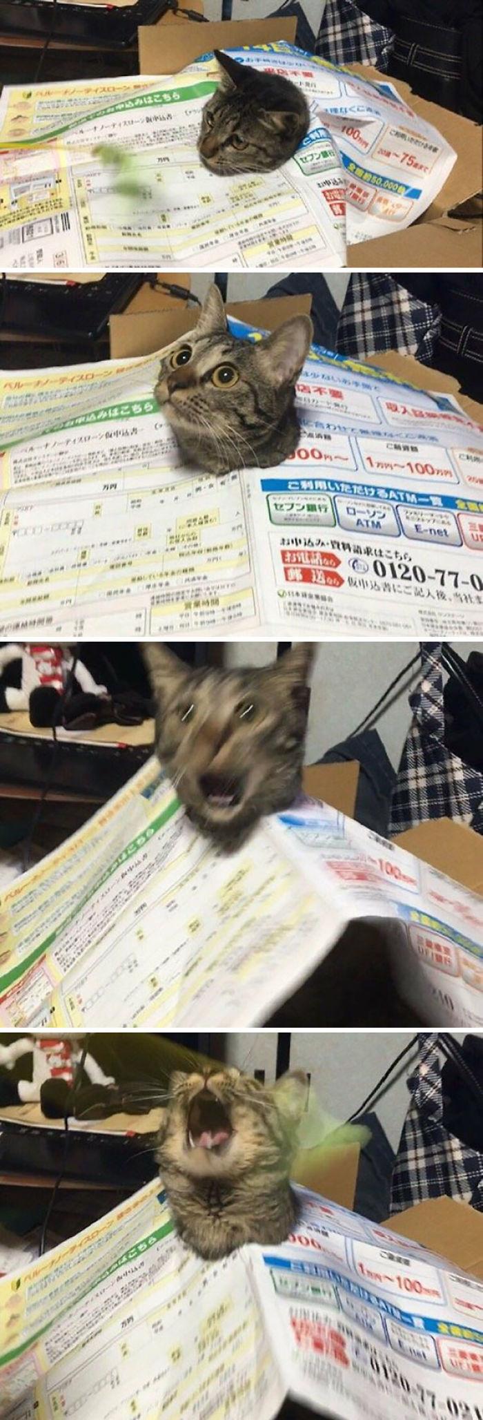 Los estados de pánico felino