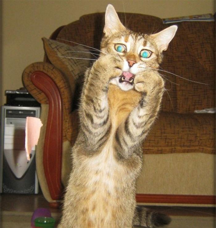 El grito en gatuno