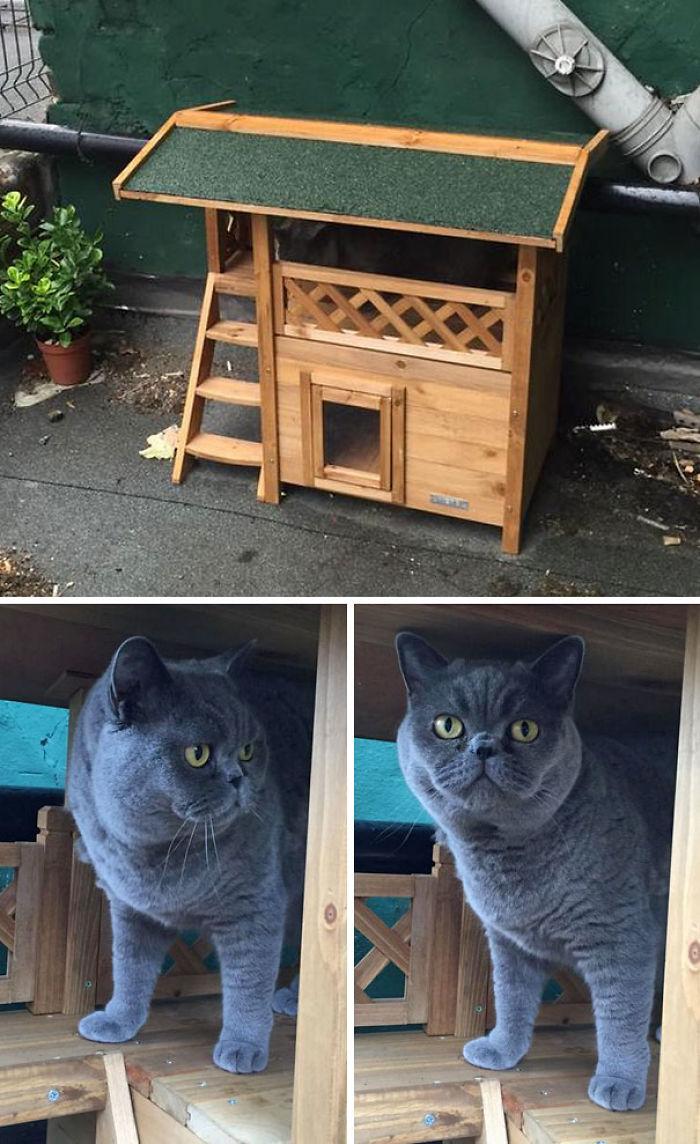 Al parecer le compré una casa al gato en Amazon